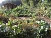 Garten Tremmel - AlT(ha)erNative Garten(T)Raeume Großmoor