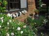 Garten Bork-Frieling-dsc_3268