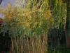 Garten Bork-Frieling-dsc_3525