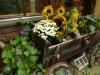 Garten Bork-Frieling-p1050050