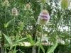 Garten Bork-Frieling-p1060770