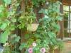 Garten Bork-Frieling-p1070055