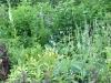 Garten Bielert 5