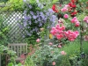 Garten Mechthild Schulze-dscn0271